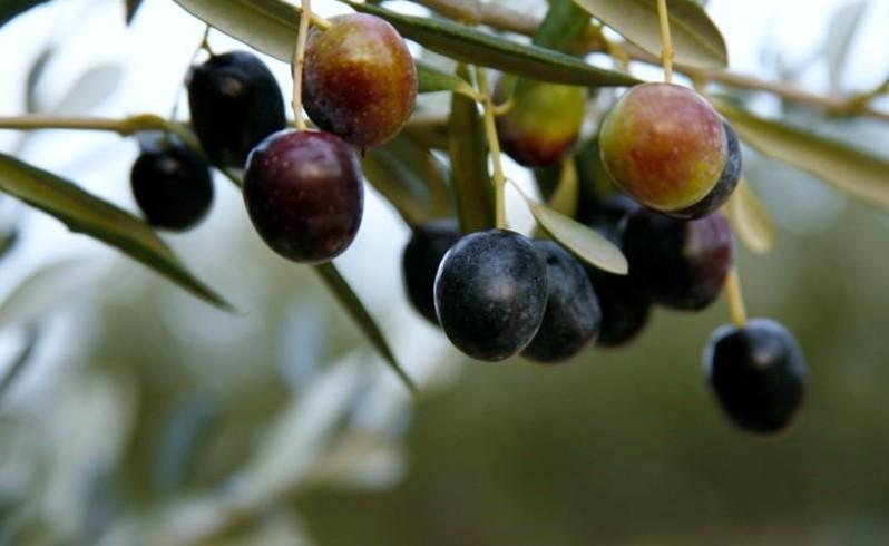 Dijamant ekstradevičansko maslinovo ulje – Novo iz Dijamanta
