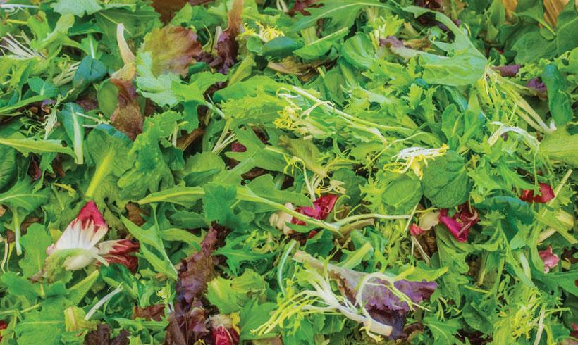 Mix zelenih salata, rukole,radiča, itd po izboru...