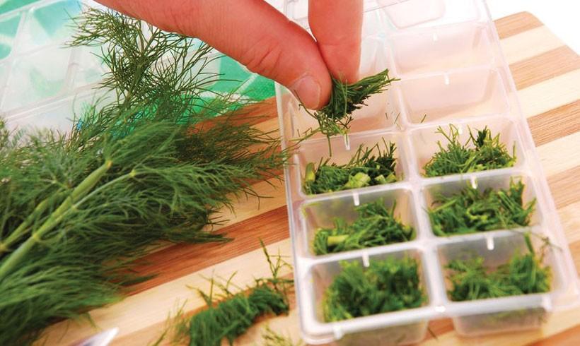 Začinsko bilje i kako ga čuvati