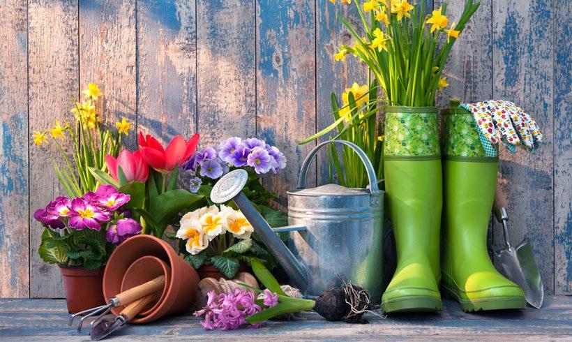 Kada procveta jun i poželi nam Dobro jutro!
